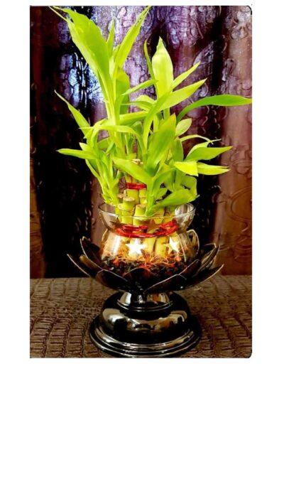 Sphinx lotus shape good luck plant bamboo shoot holder 1
