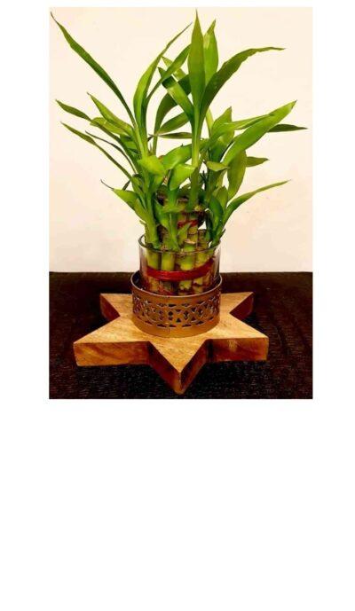 Sphinx star shape based lucky bamboo shoot holder 1